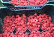 Malina deserowa - owoce świeżo zrywane