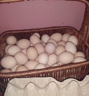Sprzedam jaja wiejskie z wolnego wybiegu