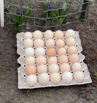 jaja wiejskie od kur z wolnego wybiegu! 0 antybiotyków. Warzywa i zboże z własnej uprawy