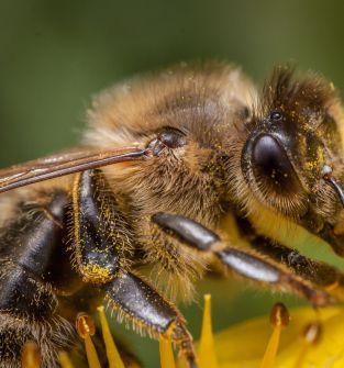 Rodziny pszczele zakarmione na zimę