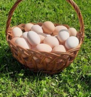 Wiejskie jajka z gospodarstwa ekologicznego