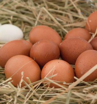 Jaja klatkowe