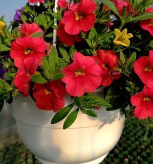 Kwiaty dostępne sezonowo