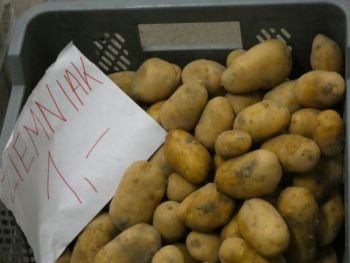 Ziemniak W typie Gali
