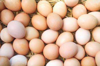 Jajka z wolnego wybiegu z hodowli przyzagrodowej