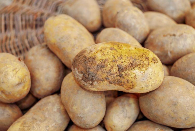 Ziemniaki Denar, Vineta, Anuszka